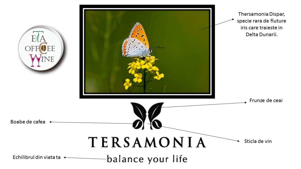 tersamonia logo story